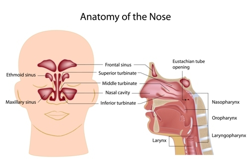 Nasal Obstruction Andrew Foreman Ent